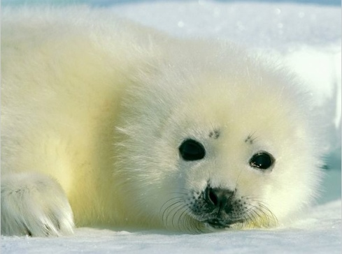Adorable baby animals photos seal