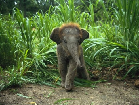 Adorable baby animals photos elephant