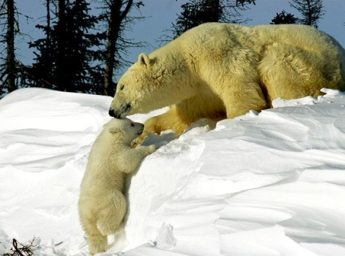 Adorable baby animals photos polar bear