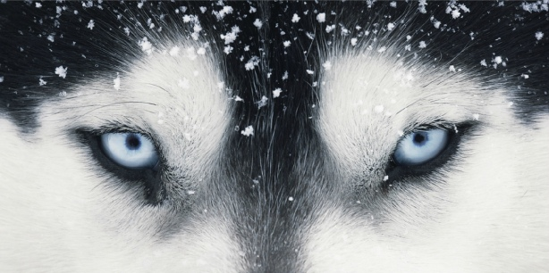Tim Flach amazing photos dogs