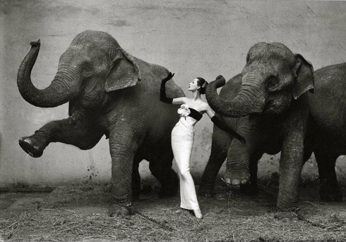 Richard Avedon photography artist