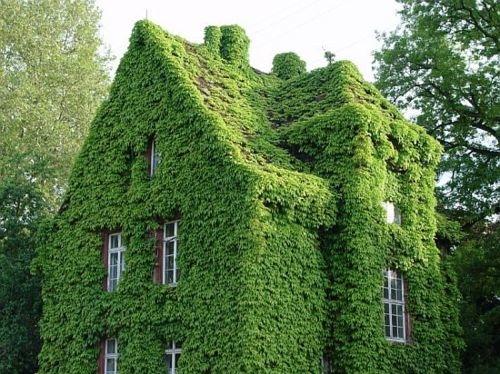 Green concept style fashion decor interiors inspiration