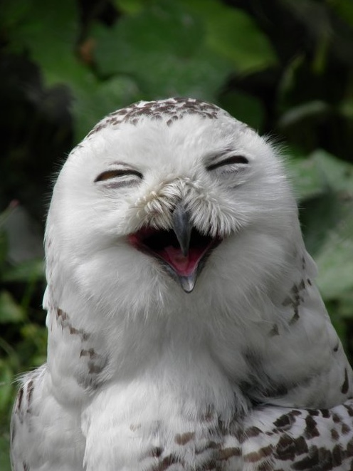 Smile heartwarming laughing seal dog owl