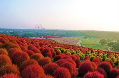 Hitachi Seaside Park travel ideas destination flowers